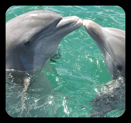 Xtreme H2O Dolphin Tours